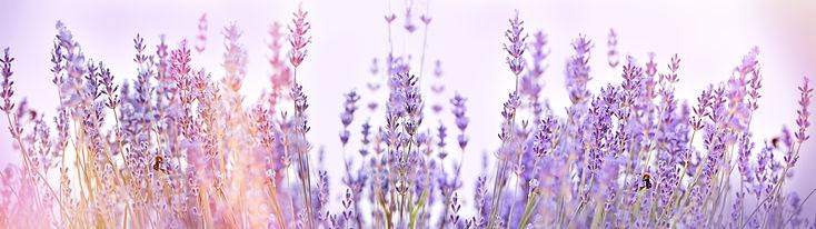 Selective focus on lavender flower in fl