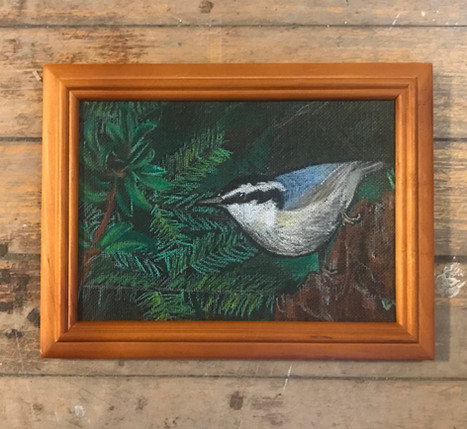Red-breasted Nuthatch (in private collection)