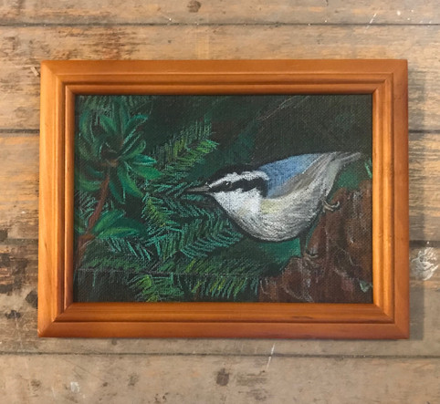 Red-breasted Nuthatch - in private collection