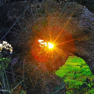 OLIVI tramonto