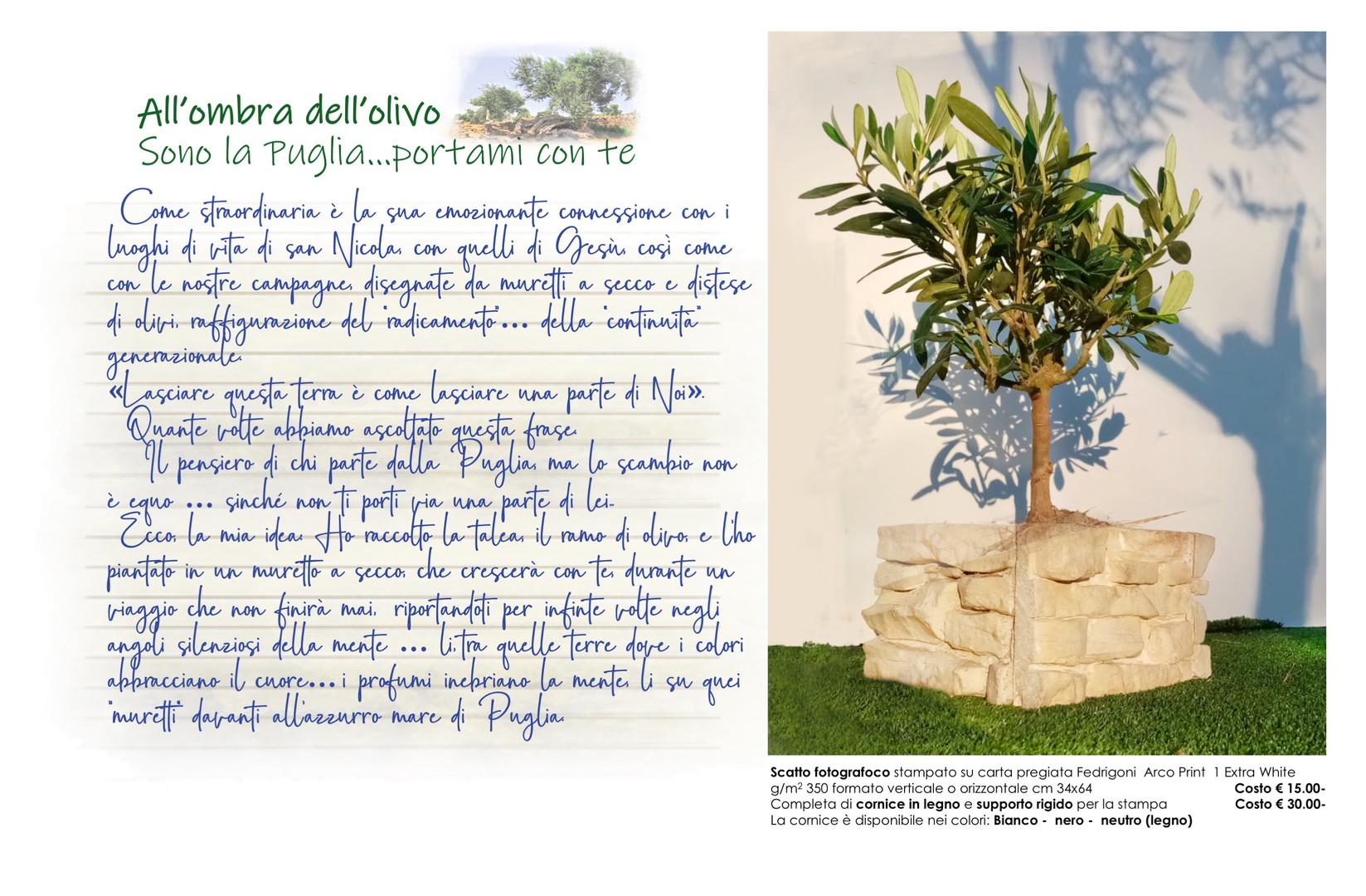 00008 All'ombra dell'olivo Talea muretto