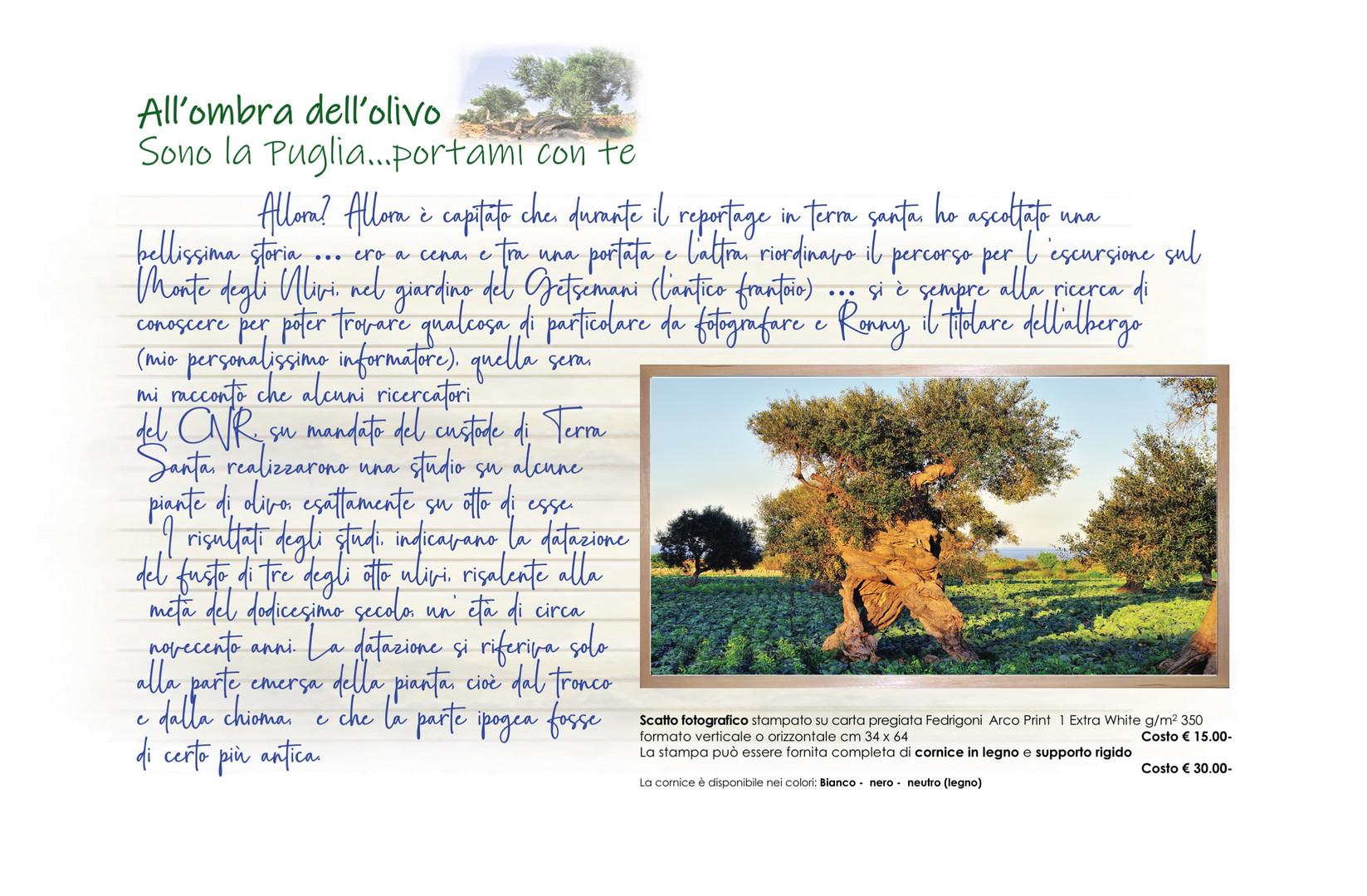 00004 All'ombra dell'olivo Talea muretto