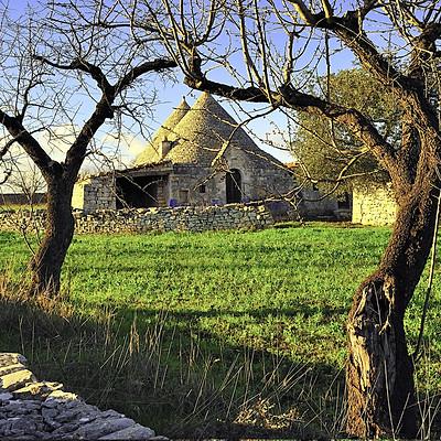 OLIVI valle d'Itria