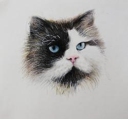 """Animal Portrait """"Gizmo"""""""