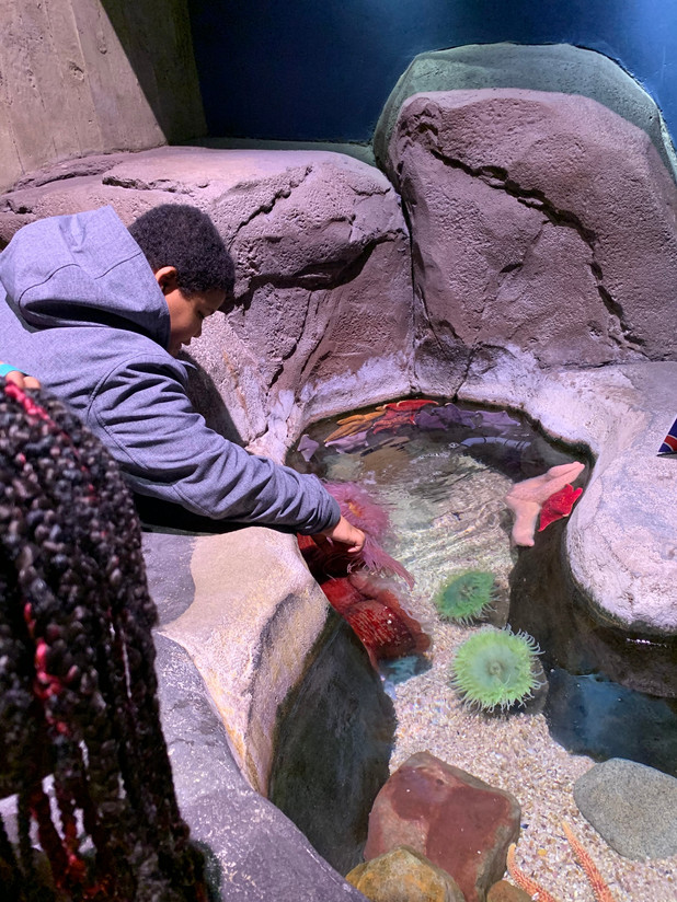 CIS of Atlanta Students Rewarded with Trip to Georgia Aquarium