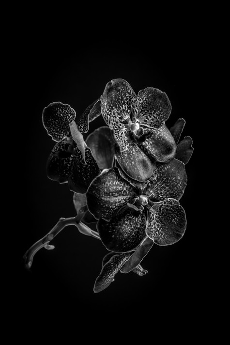 Orchidee-3.jpg