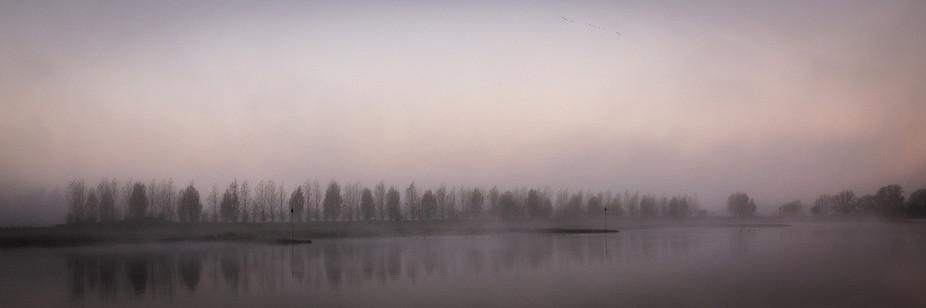 Rijn in de mist met Bomen
