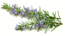 Rosemary Essential Oil | Skin & Hair