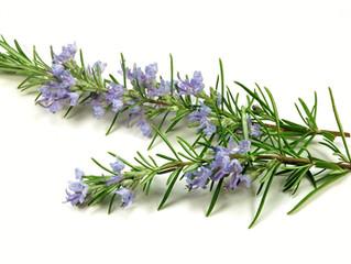 Rosemary Essential Oil | Skin & Hair