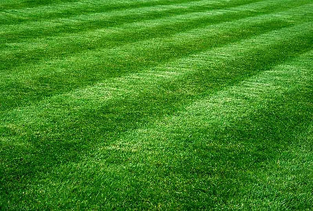 greengrass_lawnmowing.jpg