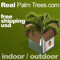 250x250_palm_trees_05.jpg