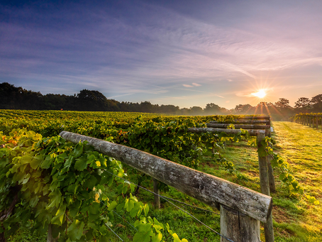 English Wine: Something to be excited about