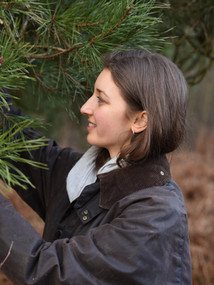 Foraging Scots Pine