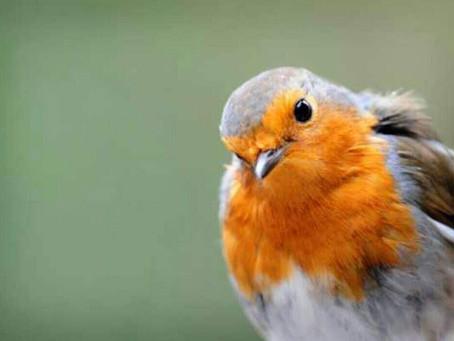 Power Animals – Robin