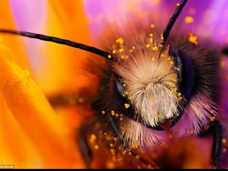 Power Animals – Bee