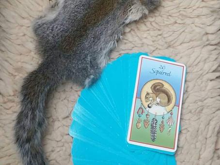 Power Animals – Squirrel