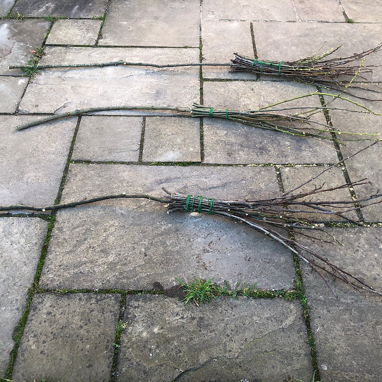 Witches Broom Workshop
