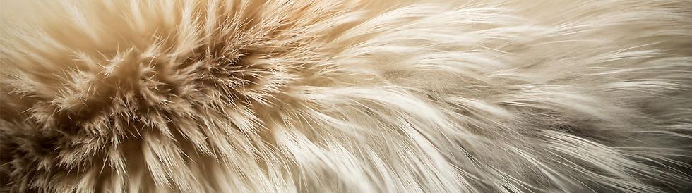 Screenshot_2020-12-23 Natural Fur, Trans