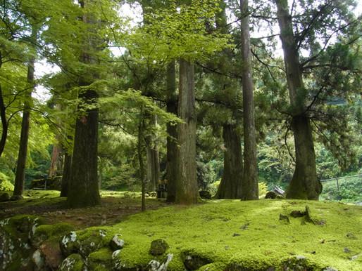 森林浴 Shinrin-yoku