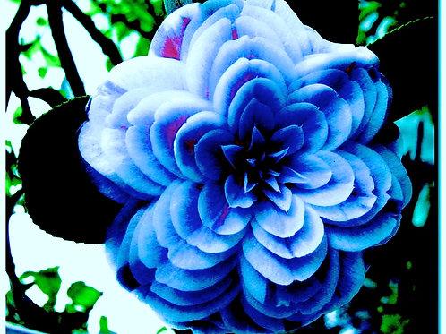 CHAKRA BLUE MASSAGE OIL by Sarasa Botanicals