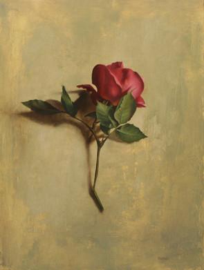 Amber's Rose