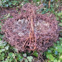 Birds Nest Deconstructed Basket