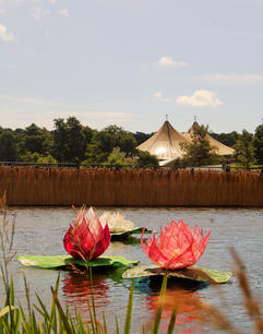 Latitude floating water lily lanterns
