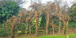 Living Willow gateway