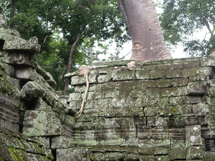 Ruinas en la selva (I)