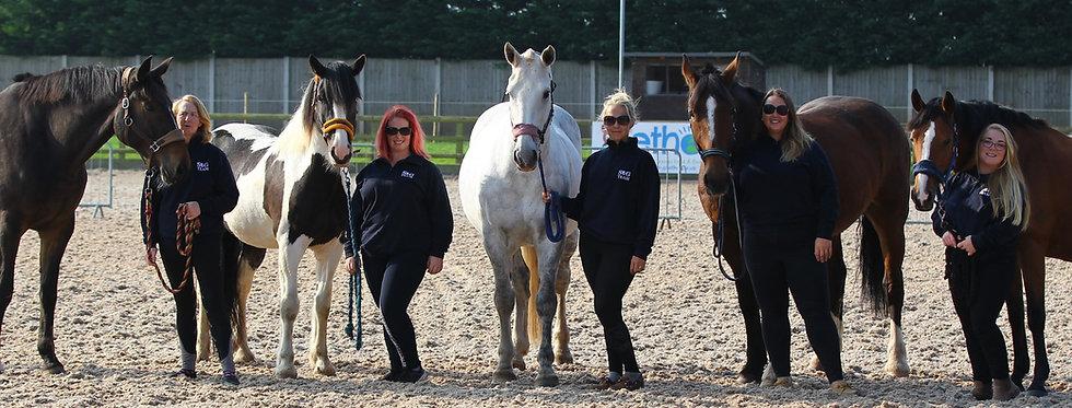 staffhorses1.jpg