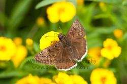 moth_014