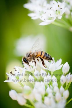 honeybee_046