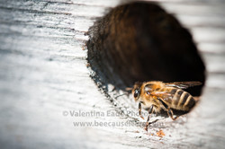 beehive_048