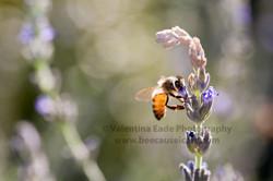 honeybee_028