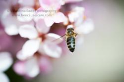 honeybee_021