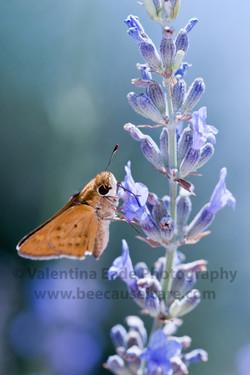 moth_018