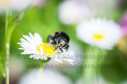 pollinatingfly_009