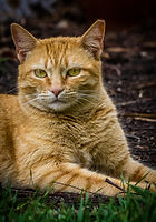 cute-cat-portrait-PH8F9HB.jpg