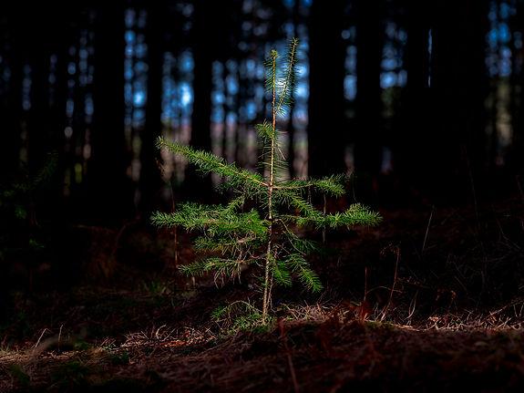 210227-72ppi-forest-tree-01.jpg