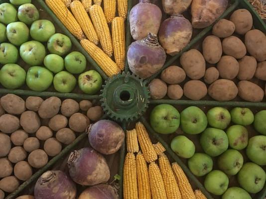 It's Harvest Time
