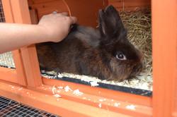 Winnie in her new hutch