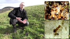 Rôle de l'agriculture de montagne dans la biodiversité [vidéo conférence]
