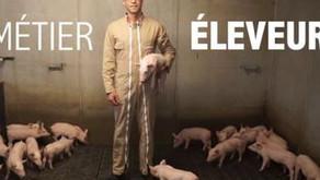 L'élevage de porcs aujourd'hui [vidéo]