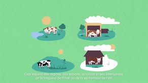 L'alimentation des vaches laitières françaises [vidéo]