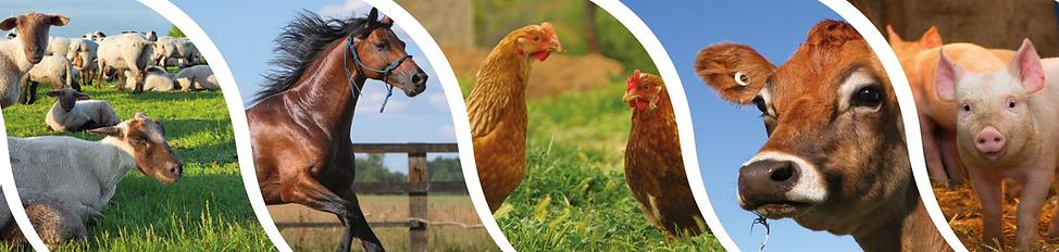 Ressources sur l'élevage, un ste dédié aux enseignats de lycées et collège en recherche de ressources pédagogiques pour parler d'élevage et d'agriculture en classe