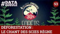 Déforestation : le chant des scies règne [Vidéo]
