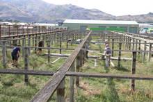Stock Yard Project 008.JPG