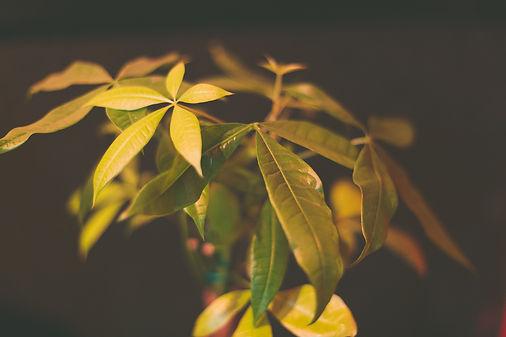 Mannchester plant.jpg
