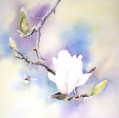 Magnolia and bee