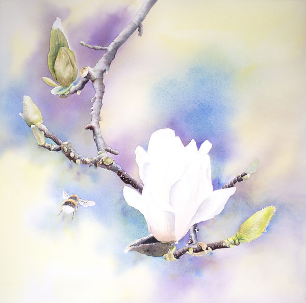 Magnolia with Bee